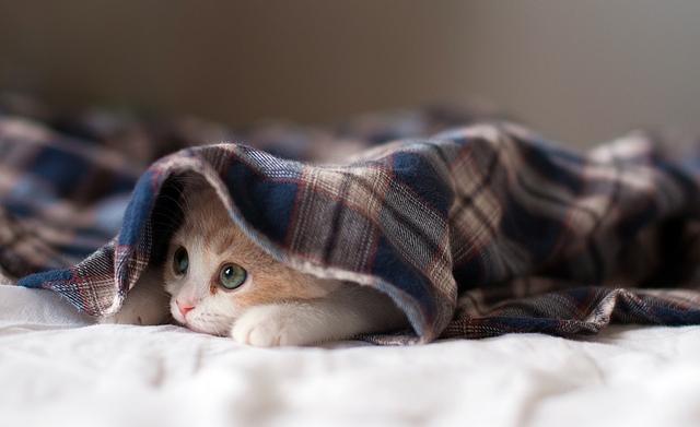 寒すぎ問題~風邪にはご注意を~